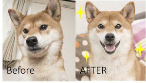 犬のアンチエイジング