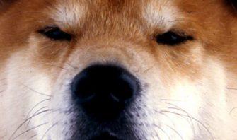 犬の遠い目