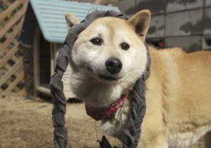 犬が掘る理由