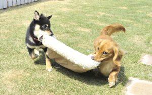 犬の社会化