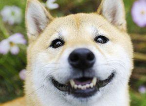 犬とのアイコンタクト