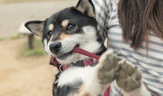 「走る」「掘る」「かく」……だけではない日本犬の足事情を徹底調査!