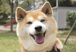 飼い主に似る犬