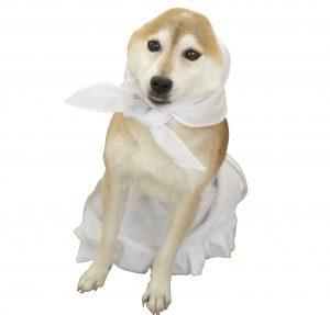 犬の避妊と去勢