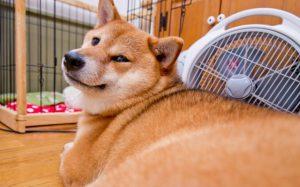 犬の豆知識