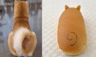 似ているのは色?形?柴犬がコッペンパンサンドになりきってみた!