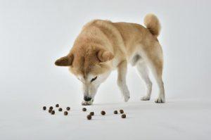 犬とドッグフード