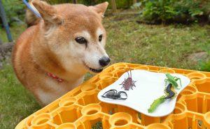夏の危険な生き物