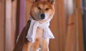 【柴犬・男飯】スタミナ食で夏バテに負けない弁当の作り方