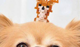 カワイイは正義!愛犬と一緒に撮って楽しむnanoblock withチワワ