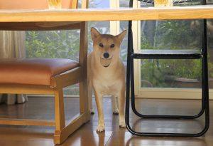 犬の騙し方