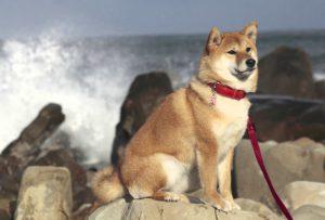 犬の生活リズム