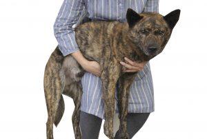 犬を抱っこする