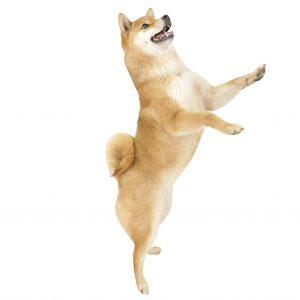 犬のマウンティング