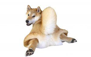 犬の尿漏れ