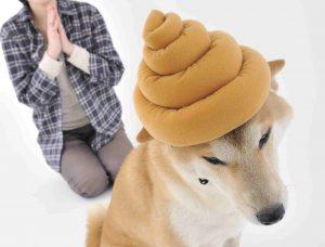 犬のことわざ