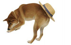 犬の夏対策
