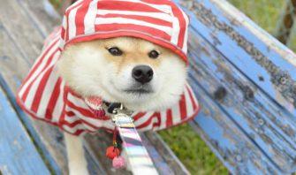 犬なんで。~柴犬ハナちゃんがつぶやく人が学ぶべき現代犬の心理~