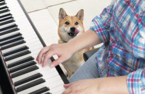 柴犬の鳴き声