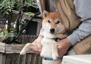 犬の共感力