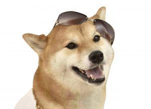 犬のメラニン色素