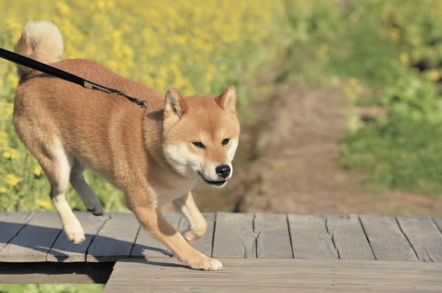 「散歩する犬」の画像検索結果