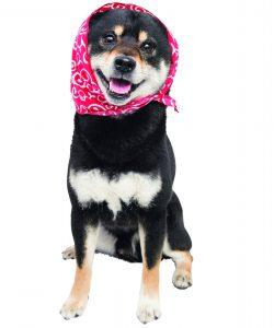 暖房器具で起こる犬の怪我