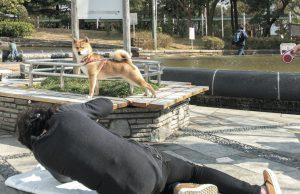 柴犬の撮り方