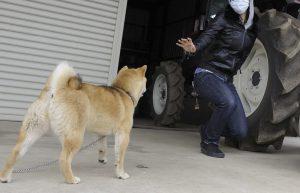 警察犬の適性