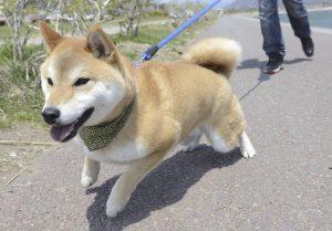 犬の苦手な音