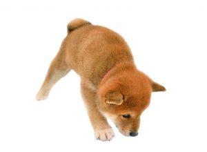 育犬ノイローゼ