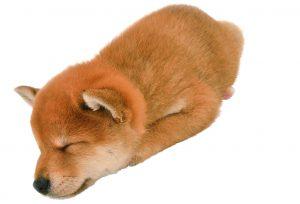 子犬の性格形成