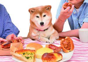犬の栄養バランス