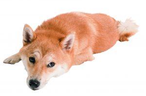 犬の土日病