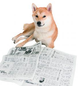 柴犬の性格