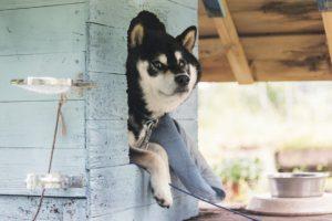 飼い主と似る犬