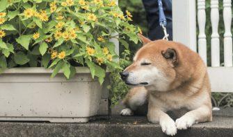 寒い時期は要注意!愛犬がオシッコを我慢する原因と対策は?