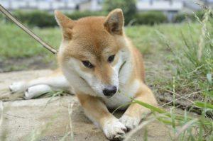 犬の自然健康法
