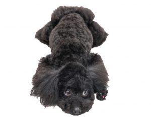 犬のオナラ