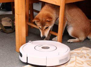 柴犬とお掃除ロボット