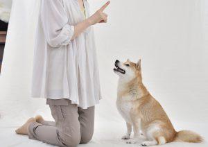 犬のトイレトレーニング