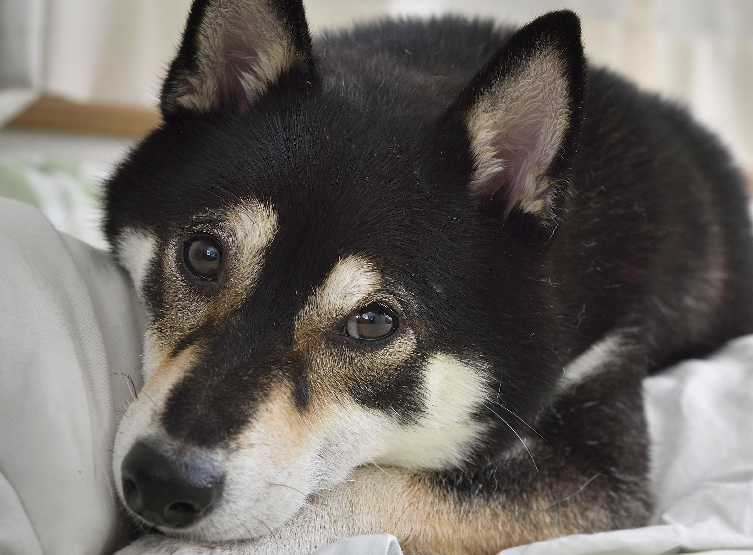 うちの犬が吐いた 危険な吐き方の見極め方 嘔吐から分かる病気