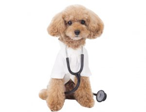 犬の糖尿病