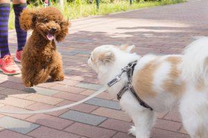 犬との同行避難