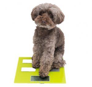 犬のお世話ノート