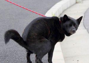 日本犬の多頭飼い