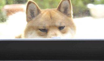 【すごすぎるぞ犬レーダー!】飼い主の考え・行動は愛犬に見透かされていた?