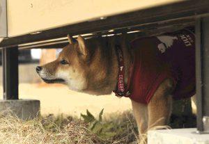 犬の震えの原因