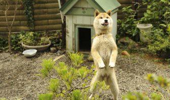 犬小屋に入らない犬。構造?場所?入居拒否の本当のワケは?