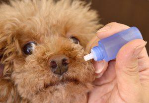 犬の点鼻薬